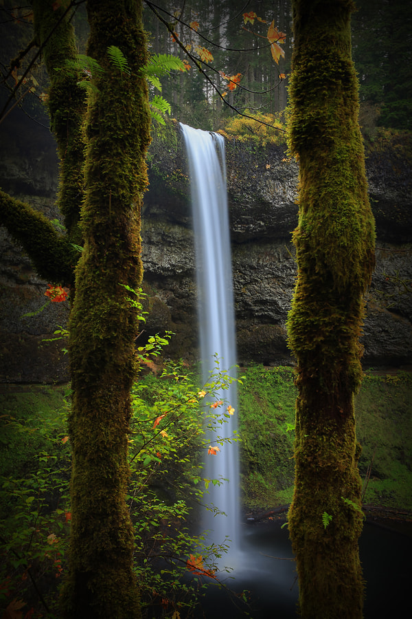 Photograph Three-Part Harmony by Tula Top on 500px