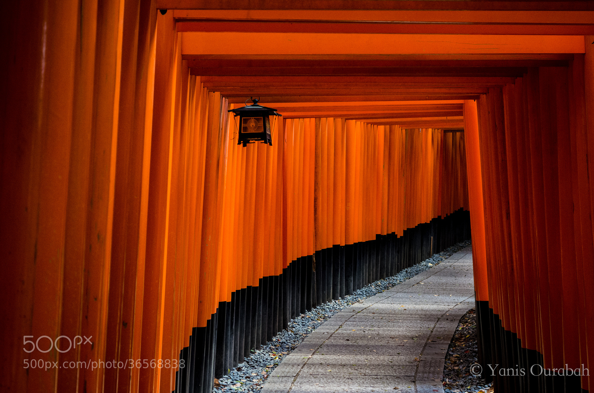 Photograph Fushimi Inari, Kyoto by Yanis   on 500px