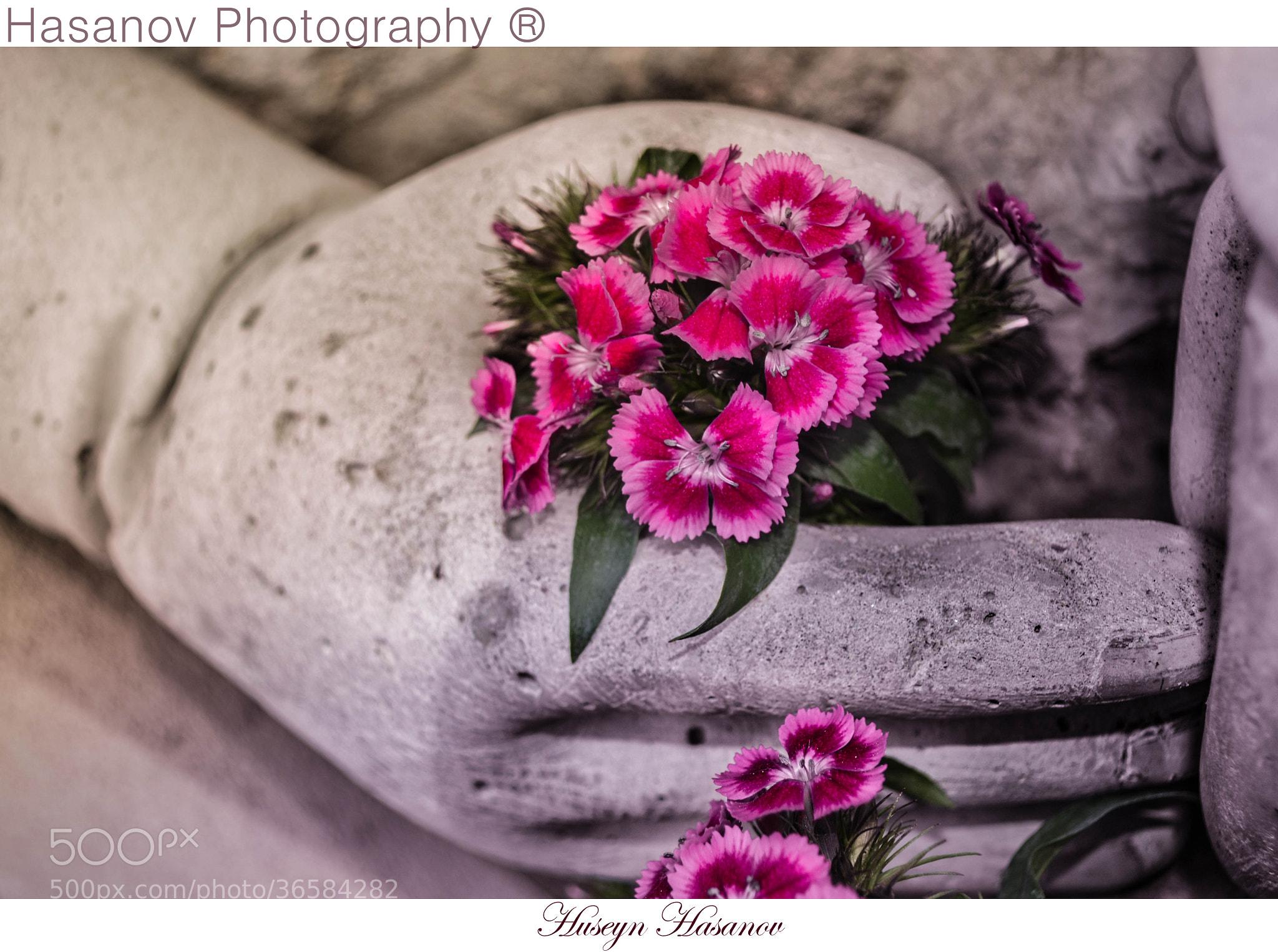 Photograph Untitled by Huseyn Hasanov on 500px