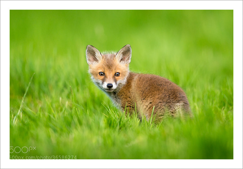 Photograph Mischief by Jules Cox on 500px