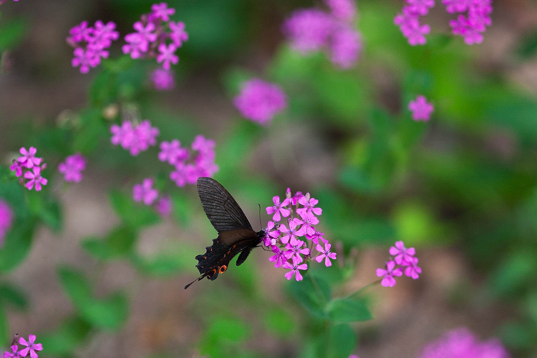 Photograph Butterfly... by Gwiyun Park on 500px