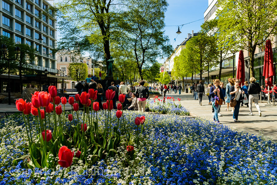 Photograph Spring in Bergen, Norway by Robin Strand on 500px