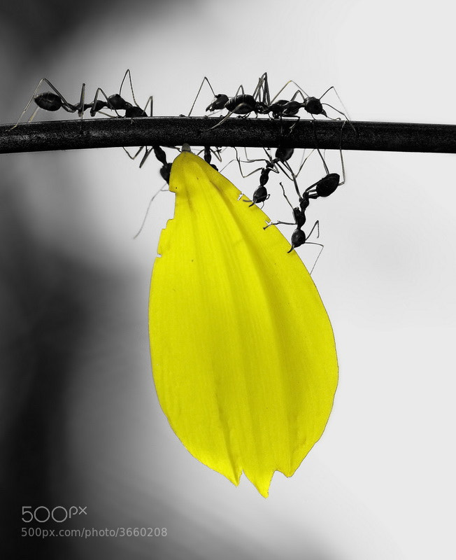 Photograph  Yellow by Aris Winahyu BR on 500px