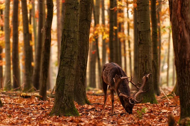 Photograph The King of Fallen Leaves by Nicolas Alexander Otto on 500px