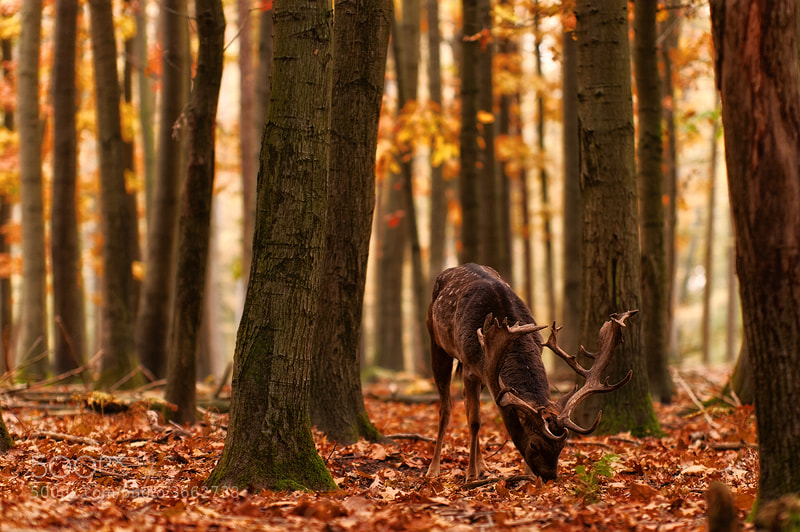 Photograph The King of Fallen Leaves by Alexander Otto on 500px