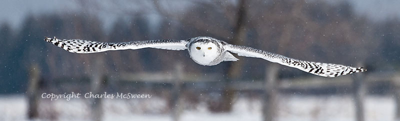 Photograph I am coming by Charles McSween on 500px