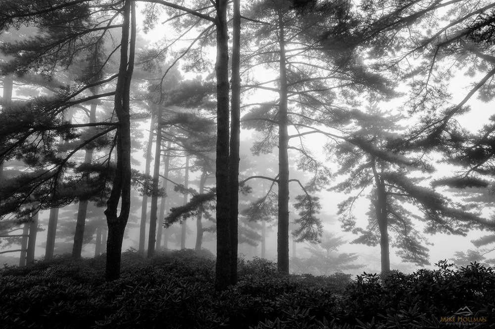 Photograph Trees in the Mist by Mike Hollman on 500px