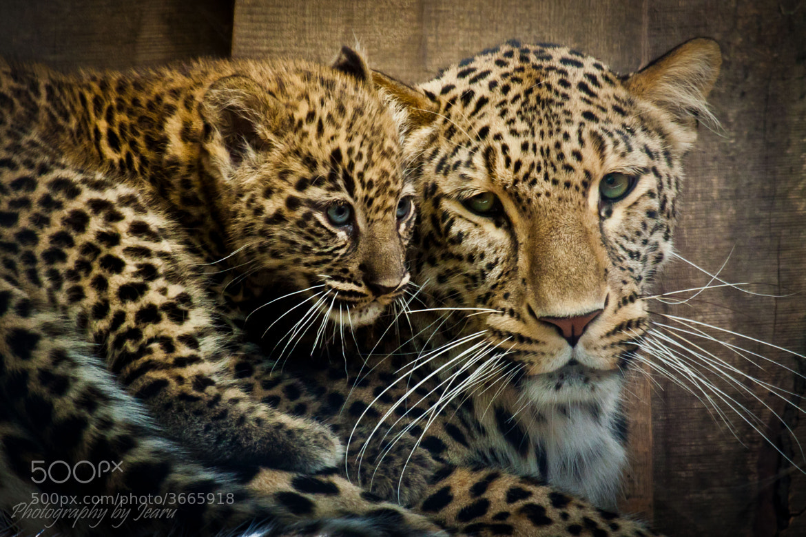 Photograph mommy by Jeannette Rudloff on 500px