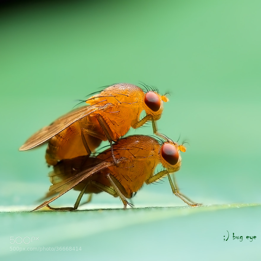 Photograph ~ in the air ~ by bug eye :) on 500px