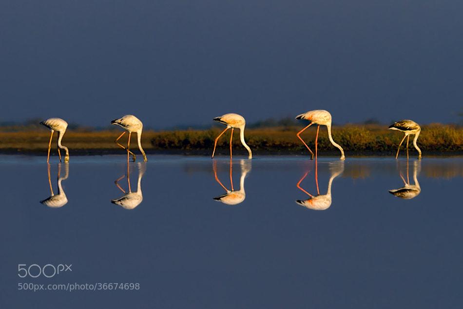Photograph Reflections by Nitin  Prabhudesai on 500px