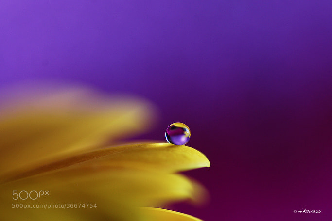 Photograph Yellow on Purple by Niko Vass on 500px