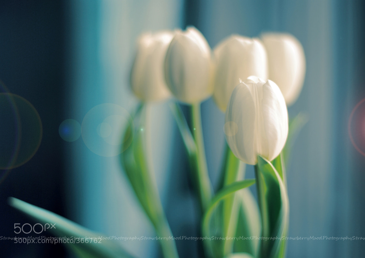 Photograph Hush!... Nearly spring 4 by Strawberry Mood on 500px