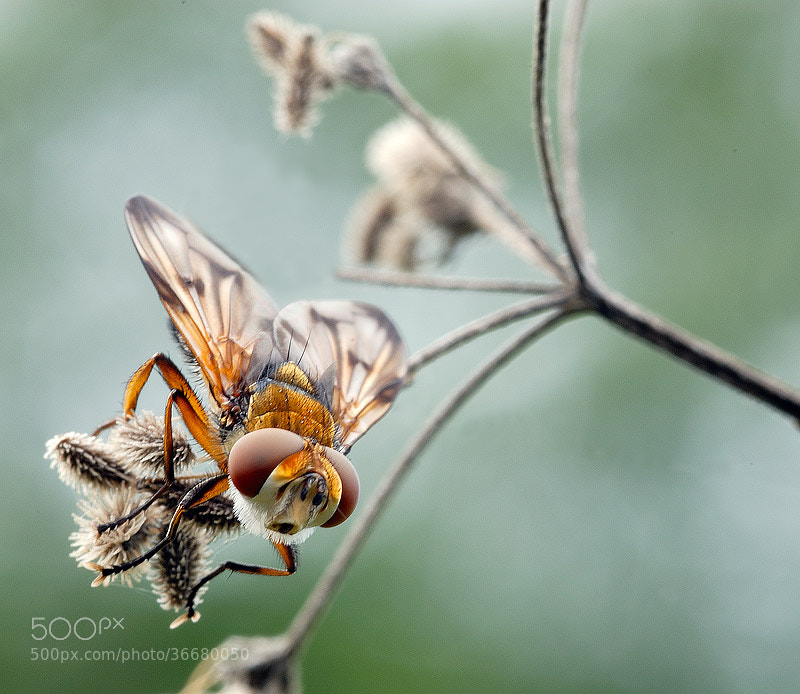 Photograph The Fly by Omar Capelli PH on 500px