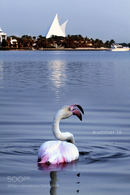Photograph Beutiful Dubai by Artist Ummer Ta  on 500px