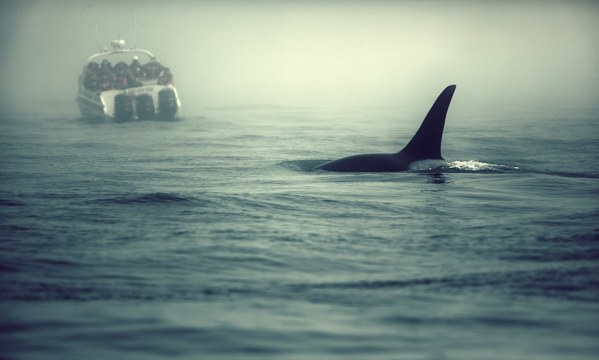 Photograph San Juan Orca by Sparth (Nicolas Bouvier) on 500px