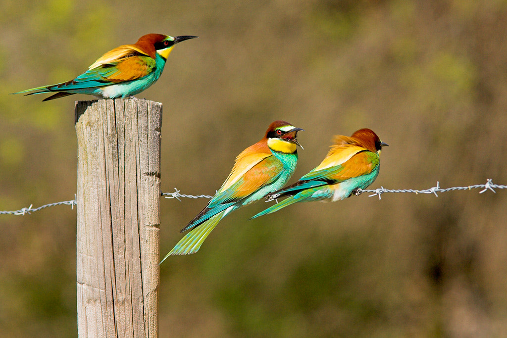 Photograph Three friends by Javier Abad on 500px