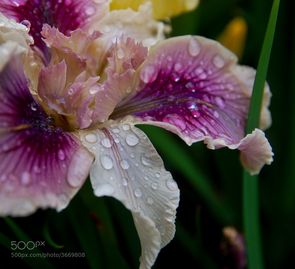 Photograph Purple Wet Series 4 by Orlin Bertsch on 500px