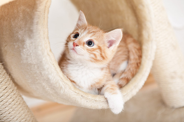 Photograph little red cat by Stefanie Lategahn on 500px