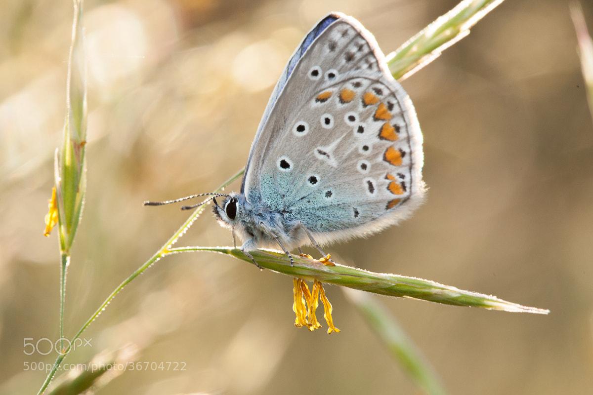 Photograph Little Butterfly by Denis Belyaev on 500px