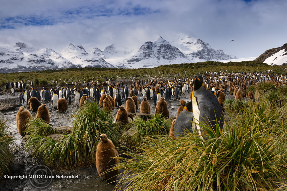 Photograph A Gathering of Kings by Tom Schwabel on 500px