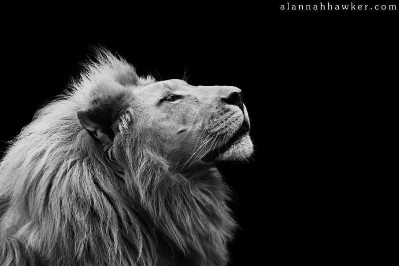Photograph Thabo by Alannah Hawker on 500px