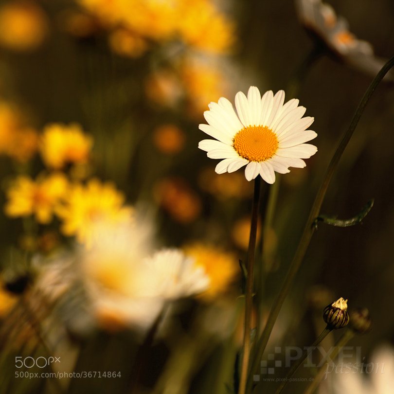 Photograph white and yellow by Pixel Passion on 500px
