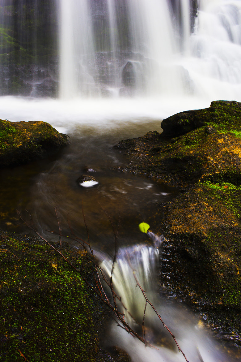 Photograph White Water Leaf by Matt H on 500px