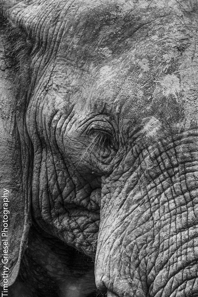 Photograph Ellie by Timothy Griesel on 500px