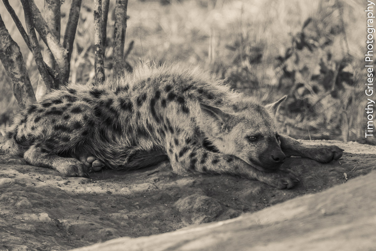 Photograph Lazy Pup by Timothy Griesel on 500px