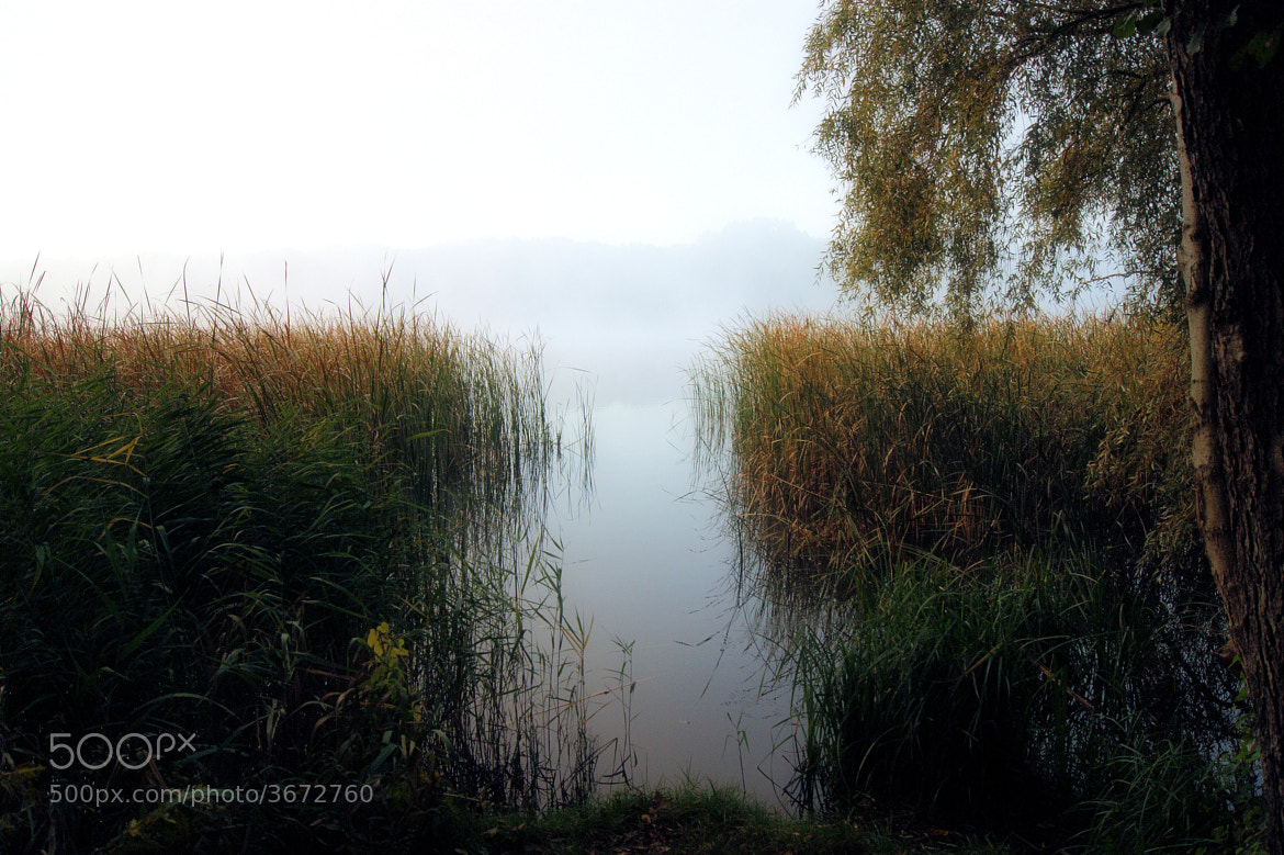 Photograph Morning mist IV by Przemek Hewelt on 500px