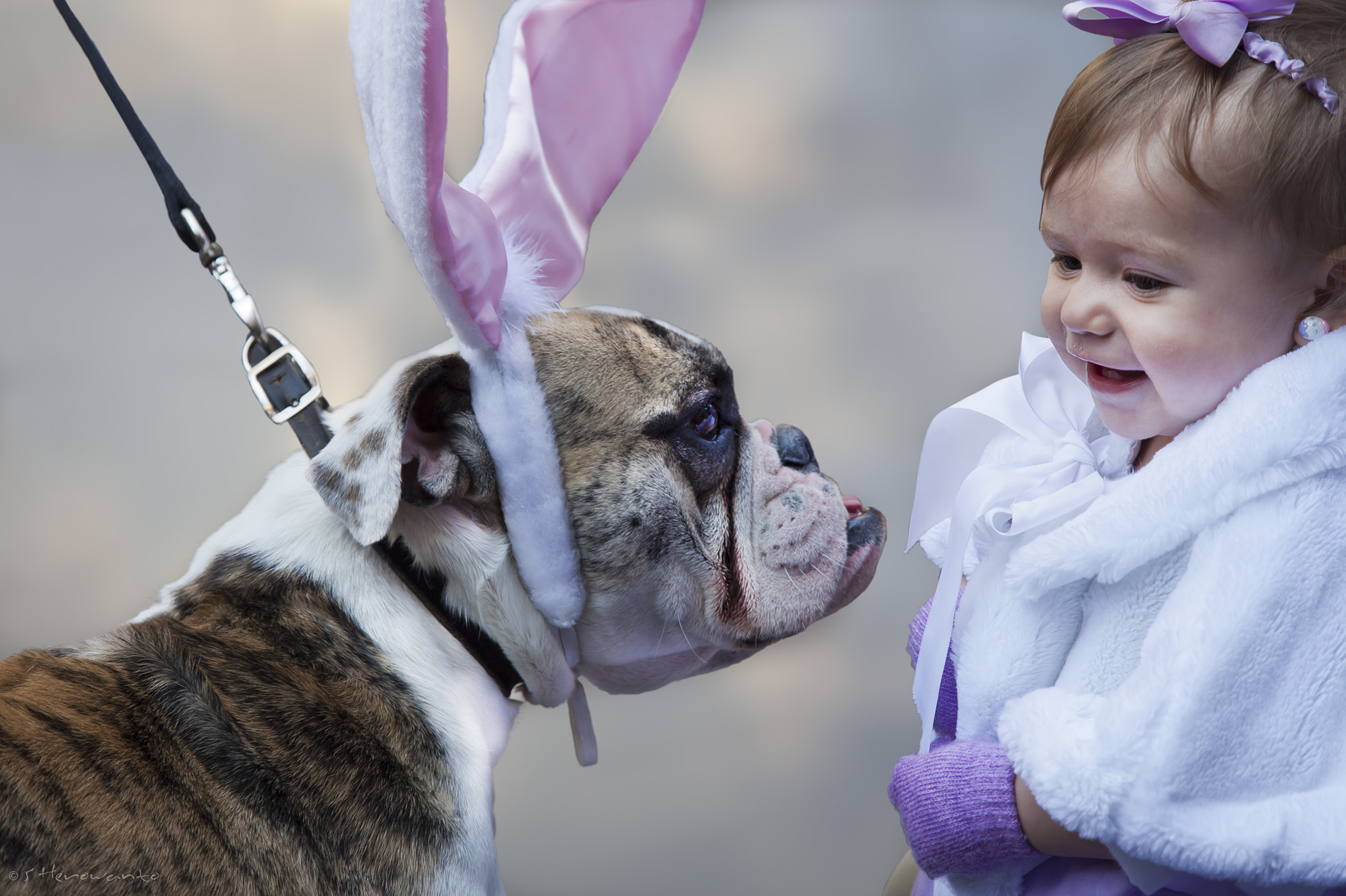 Photograph Easter Dog..... by Warren  on 500px