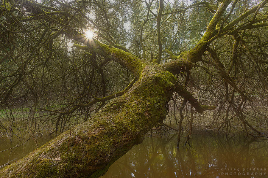 Photograph Fallen Giant by Chirag Pradhan on 500px