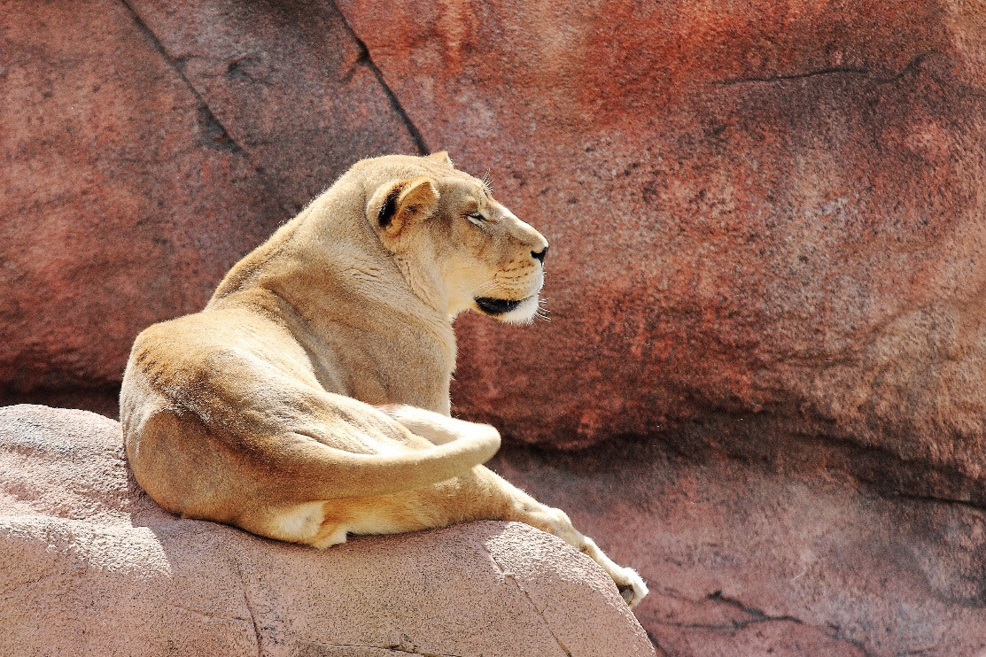 Photograph Queen overlooking her Kingdom by Vincent Falardeau on 500px