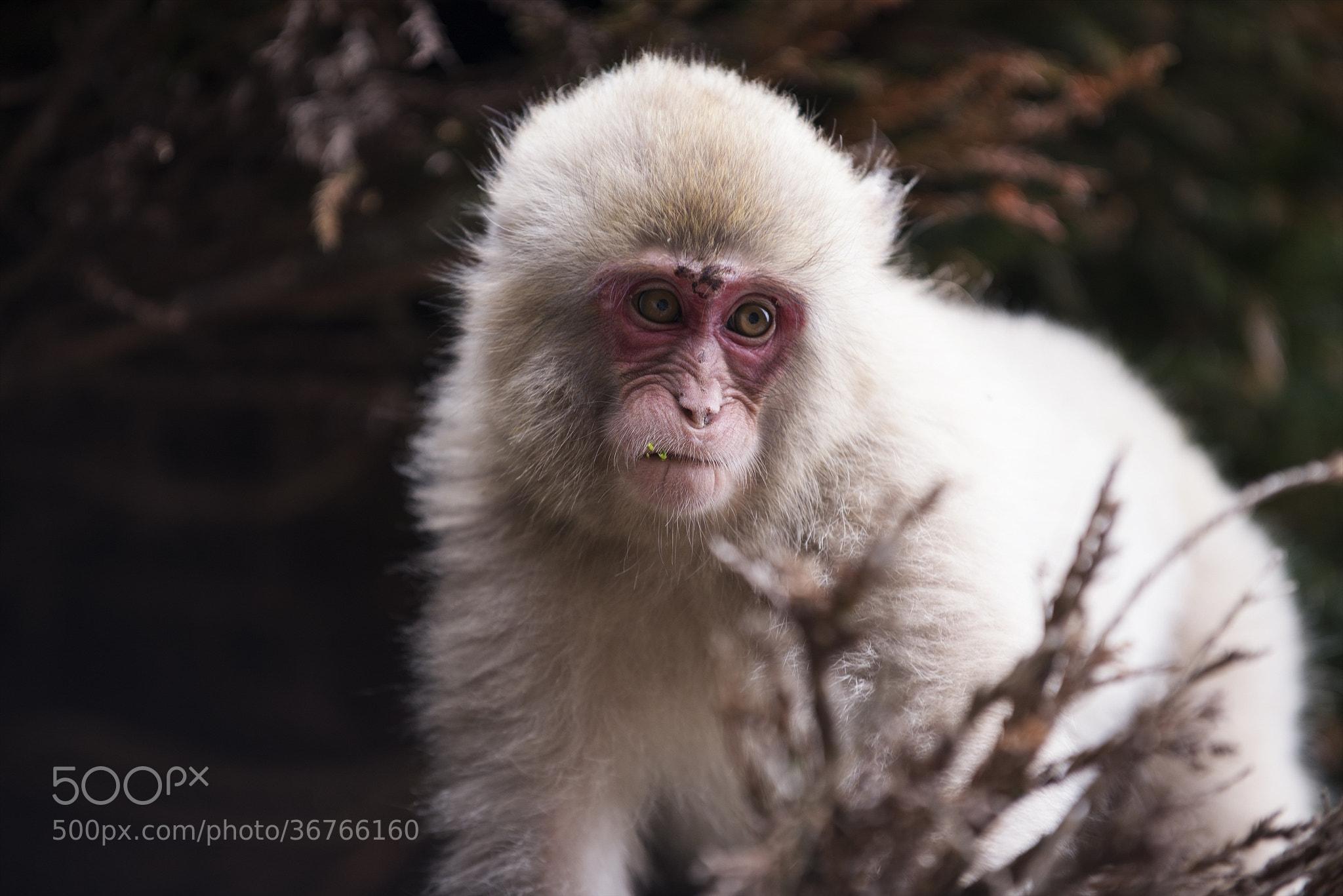 Photograph A lonely monkey by hugh dornan on 500px