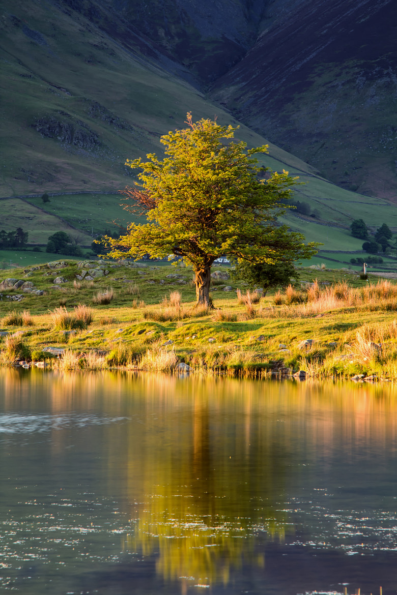Photograph Tewet Tree by Phil Buckle on 500px