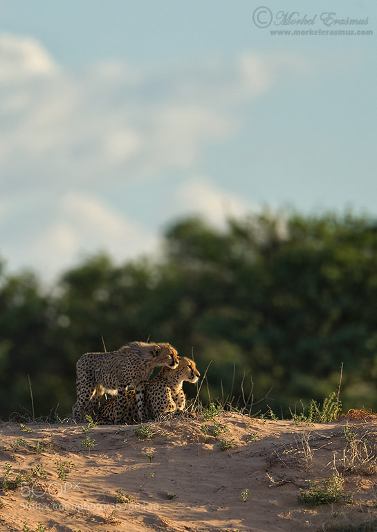 Photograph Cuddles on the Dune by Morkel Erasmus on 500px