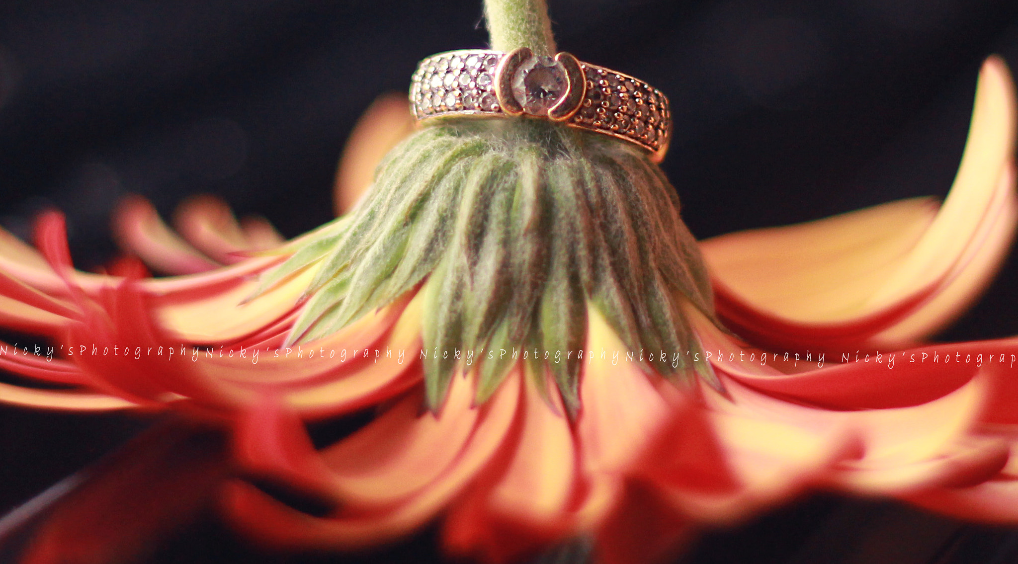 Photograph Beauty with crown by Nicky Jain on 500px