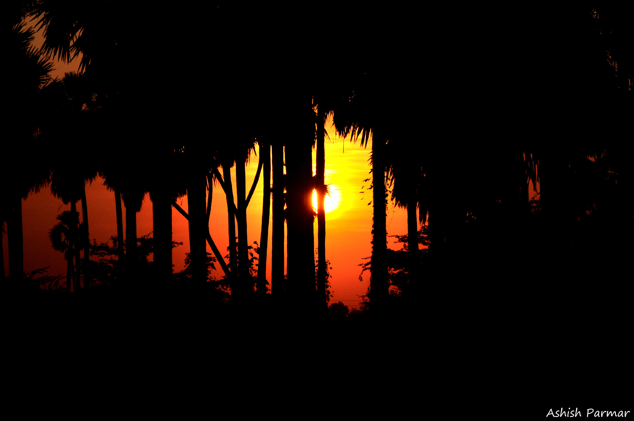 Photograph ~Silhouette Of the evening~  by Ashish Parmar on 500px