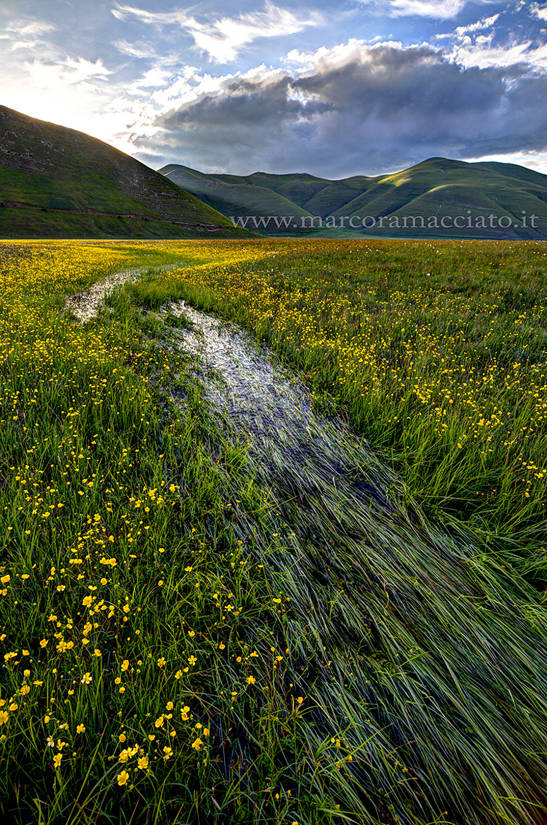 Photograph Water in the grass by Marco Ramacciato on 500px