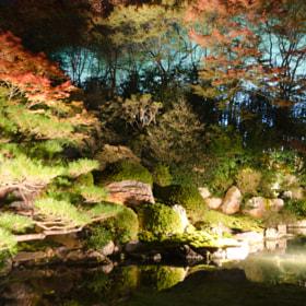 Garden in light