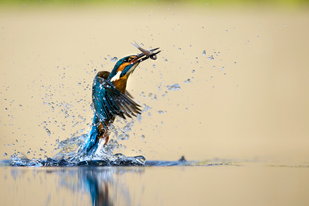 Photograph up up and away... by Mark Bridger on 500px