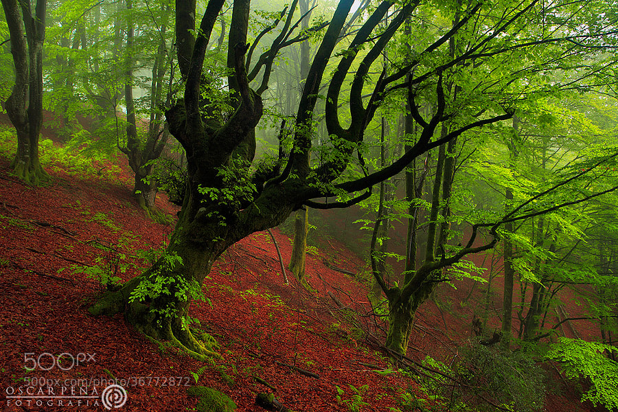 Photograph - Bosques de luz - by Oscar  Peña on 500px