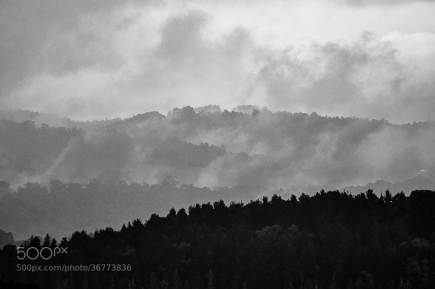 Photograph Misty Morning by Joshua Tagicakibau on 500px