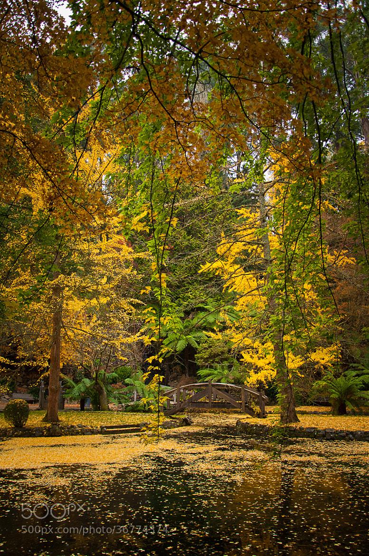 Photograph Autumn Overload by Joshua Tagicakibau on 500px