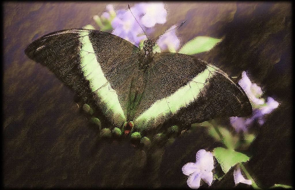 Photograph Green butterfly  by Paul Wyman on 500px