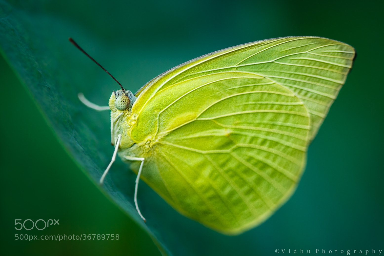 Photograph Yellow Queen by Vidhu S on 500px