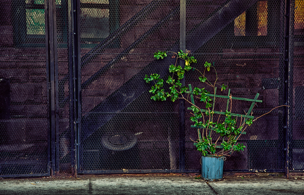 Photograph A Splash of Green by Paul Bartell on 500px