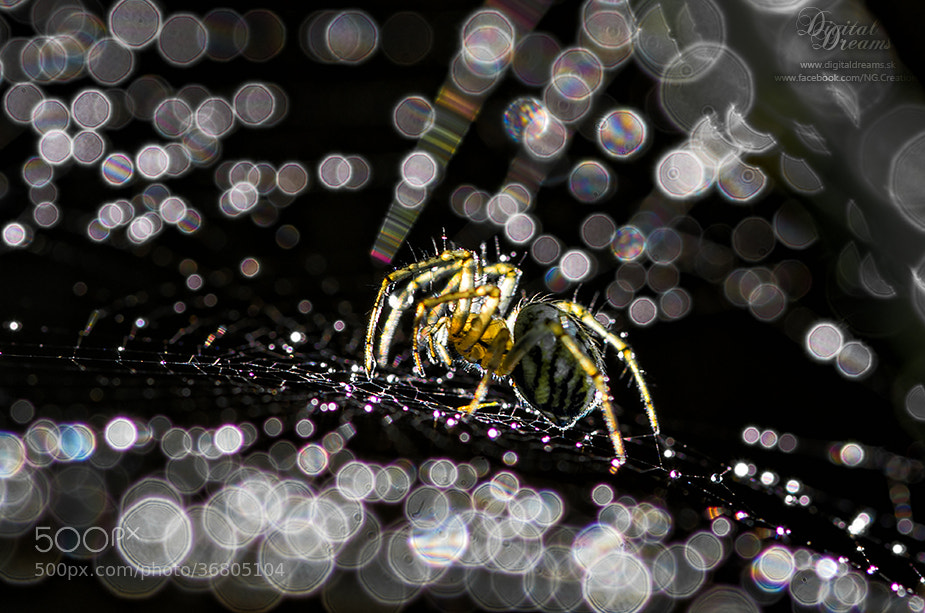 Photograph Spider by Norbert G on 500px