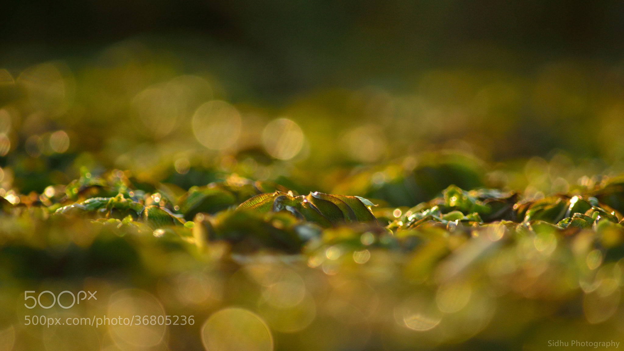 Photograph Playing with Bokeh by Arun Siddharth on 500px