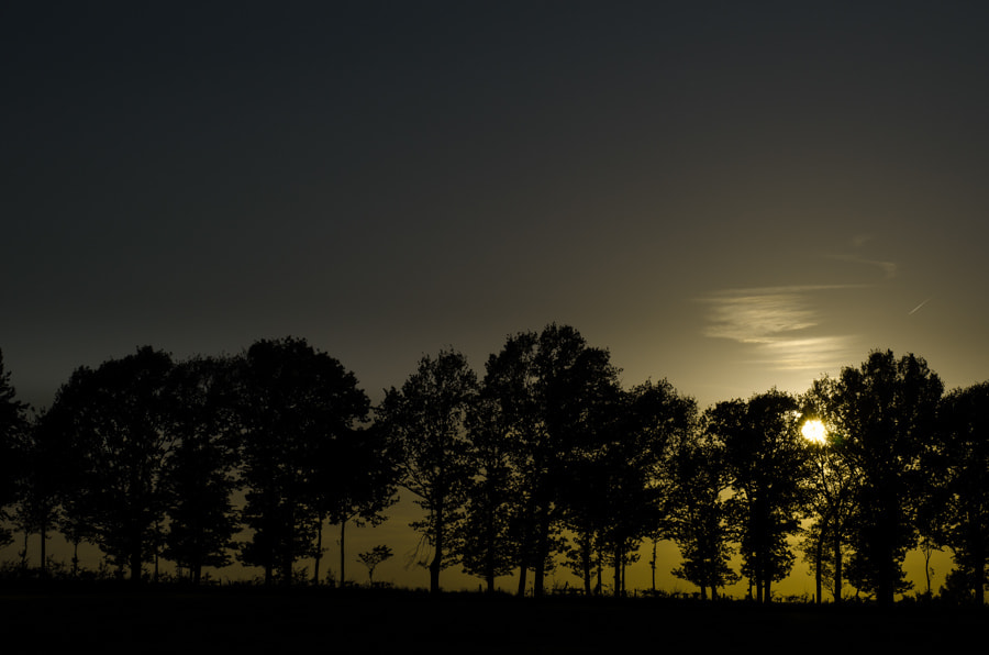 Photograph tree`s in sunset by Gunter Werner on 500px